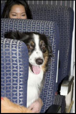Dogs on the Eurostar? You're barking