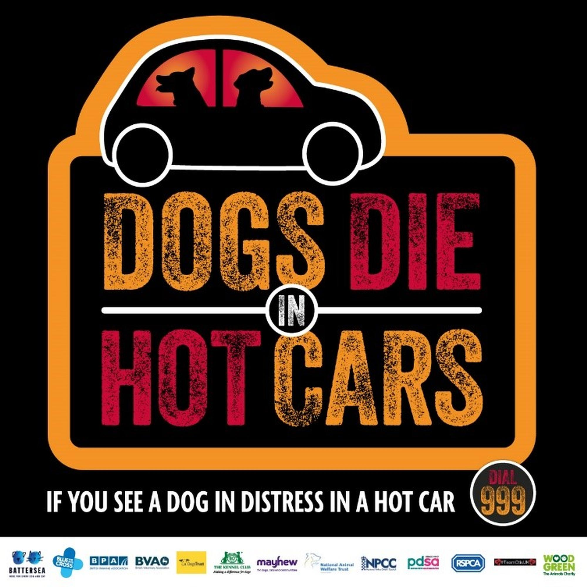 If you see a dog in distress in a parked car call 999
